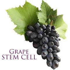 plant stem cell benefits left